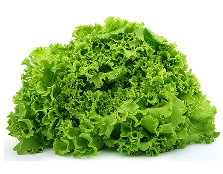Lollo lettuce